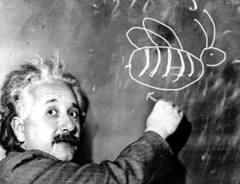 Photo of Albert Einstein sketching bee