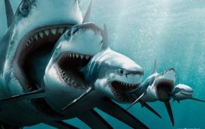 shark_eat